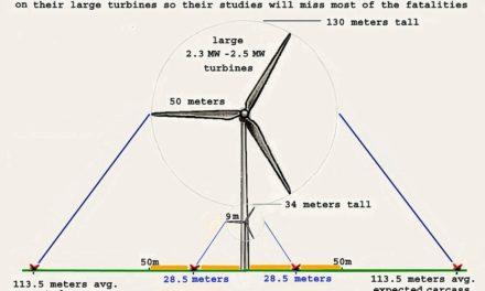Big Wind verschleiert die Beweise, das Turbinen Vögel töten – und wird belohnt. So haben sie es gemacht: