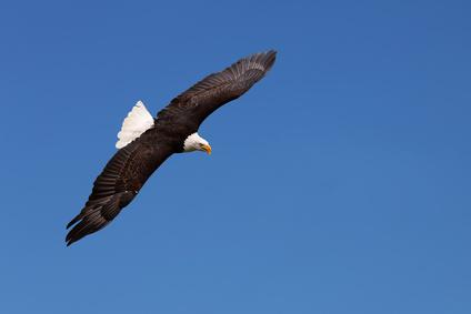 Kampf dem Klimawandel durch das Töten von Adlern!