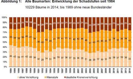 Nicht ewig leiden die Wälder- Wie der deutsche Wald innerhalb von drei Monaten genesen ist