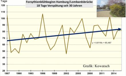 Seit 30 Jahren erfolgt laut DWD- Daten die Forsythienblüte in Hamburg immer später.