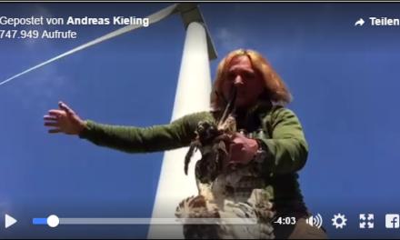 """""""Ich könnt kotzen!"""" Klammheimlich zerstört die Windmafia seltene Storchennester, um den Weg frei zu machen für Windkraftanlagen"""