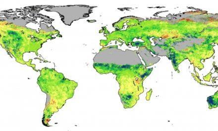 CSIRO-Studie: Steigender CO2-Gehalt lässt die Wüsten ergrünen