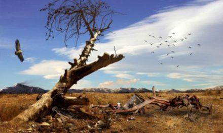 Die Kosten des Klimaänderungs-Alarmismus