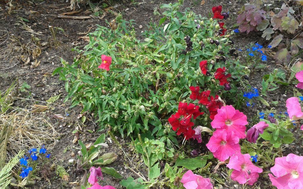 Studie: Pflanzen überstehen Dürre bei erhöhten CO2-Werten besser