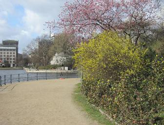 """Frühlingserwachen und """"Klimawandel"""": Die Forsythienblüte verspätet sich seit 30 Jahren"""