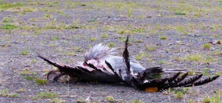 Der Vogel-Killer-Strom