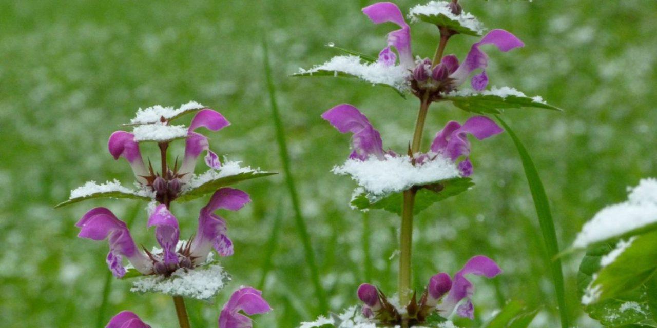 Schnee statt Frühlingswärme- geht der Klimaerwärmung nun auch im April die Puste aus?  Teil 1
