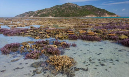 """Sind fallende Meerespegel eine wesentliche Ursache der Korallenbleiche im """"Korallendreieck"""" mit dem Great Barrier Reef?"""