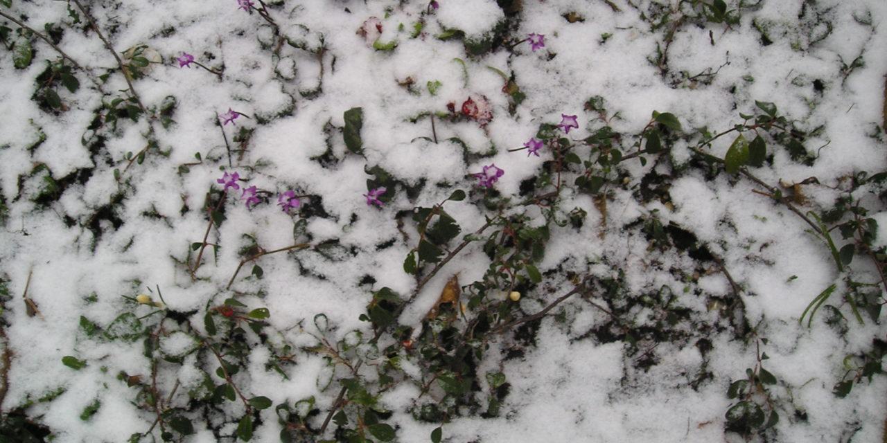 Es darf ruhig noch kälter und schlimmer werden – der April war immer noch zu warm