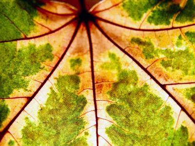 Was ist wahr – die Photosynthese oder die Geschichte vom  Klimamakiller CO2 ?