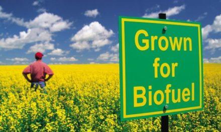 Rechtfertigungen für Biotreibstoff sind illusorisch