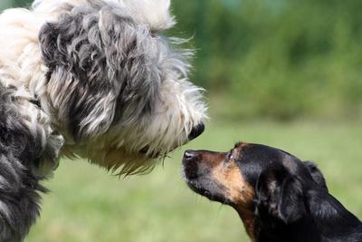 Haben Sie ein Haustier? Dann müssen wir ehrlich mal darüber reden!