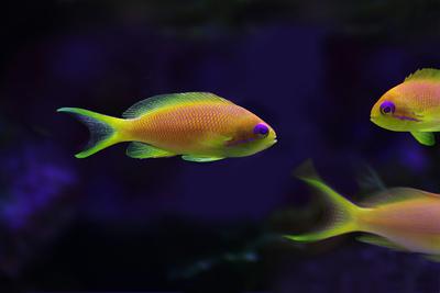 Wegen des Klimawandels sind die Fische kleiner, und es gibt nicht mehr so viele verschiedene