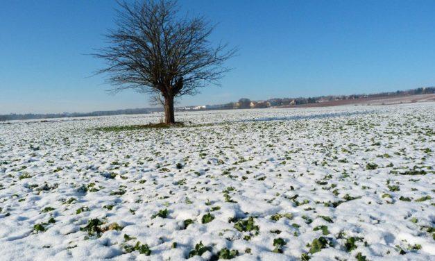 Winter 2017/18 – weiterhin Tendenz zu milder, wechselhafter Witterung