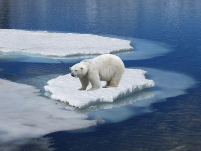 NOAA erneut ertappt: Datenmanipulation, diesmal mit der Eliminierung einer Rekord-Kältewelle