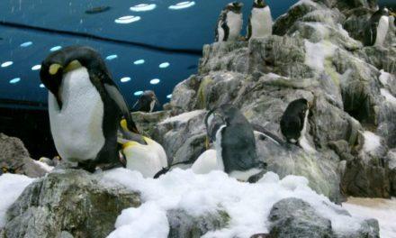 Doch keine Gefahr durch Klimaerwärmung? – Wissenschaftler fanden Superkolonie von Pinguinen in der Antarktis