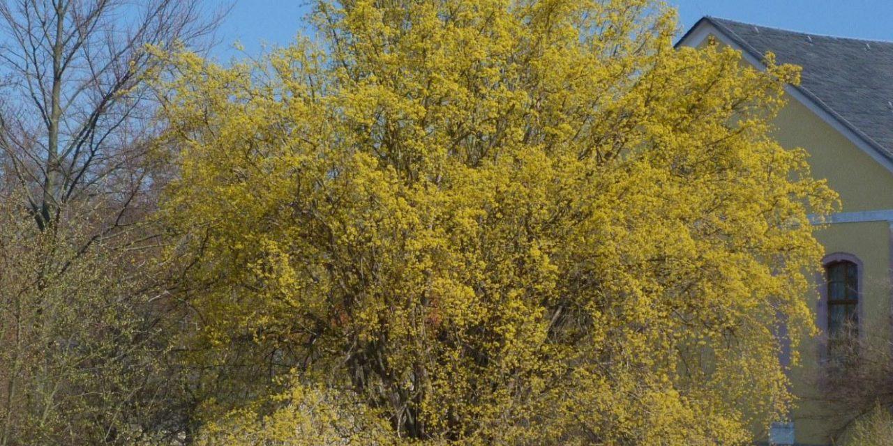 Keine Klimaleugner, weil unbestechlich: Die Frühblüher in Norddeutschland lassen sich neuerdings etwas mehr Zeit