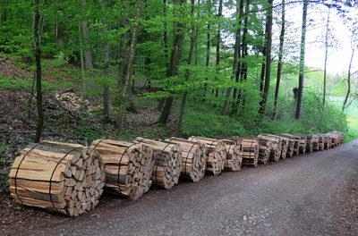 Grüner Schock: Ganze Wälder werden vernichtet, nur um Biomasse in Gestalt von Holz-Pellets herzustellen