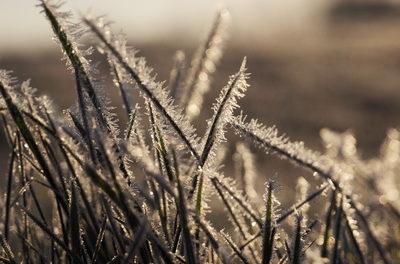 Rundbrief des <i>Heartland Institutes</i>: Antarktis kälter als bisher; Medien ignorieren Abkühlung des Klimas