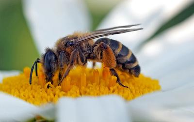 NATURZERSTÖREND Insektentod und Windradanlagen