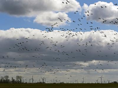 Neue Studie: Ein Windpark tötet 75% aller in der Nähe hausender Bussarde, Falken und Milane