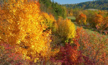 Milder Oktober 2018 – Eine bloße Laune der Natur?