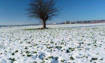 Winter 2018/19 – wie gut waren die Prognosen?