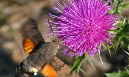 Insektensterben und Energiewende – einige Anmerkungen