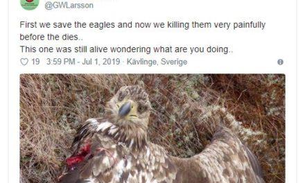Verwaltungsgericht und vogelmordende Windräder:»Ein Nullrisiko ist nicht zu fordern«