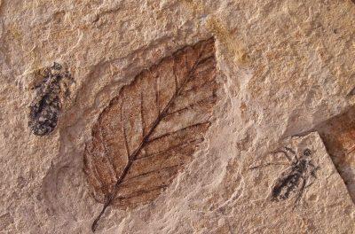 Atmosphärischer CO<sub>2</sub>-Gehalt der letzten 15.000 Jahre, bestimmt aus Fossilien