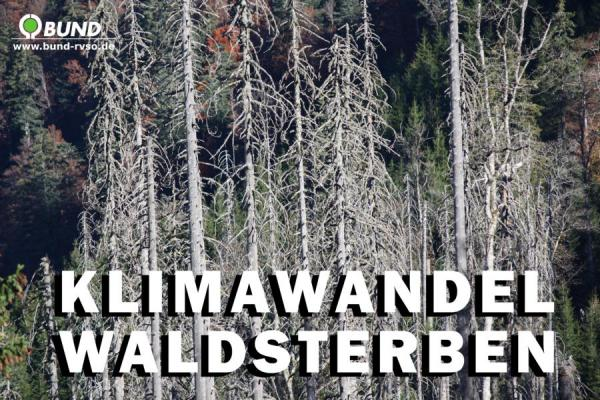 """""""Geisterwälder"""" durch Meeresspiegelanstieg in Nordamerika?"""
