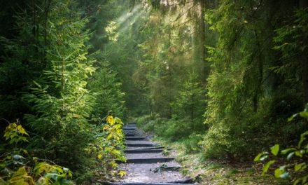 Klima und Wald