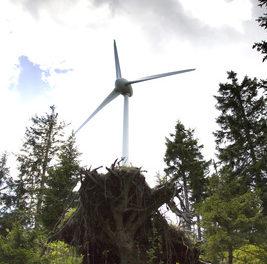 Todesfalle Windräder: Eine Erklärung