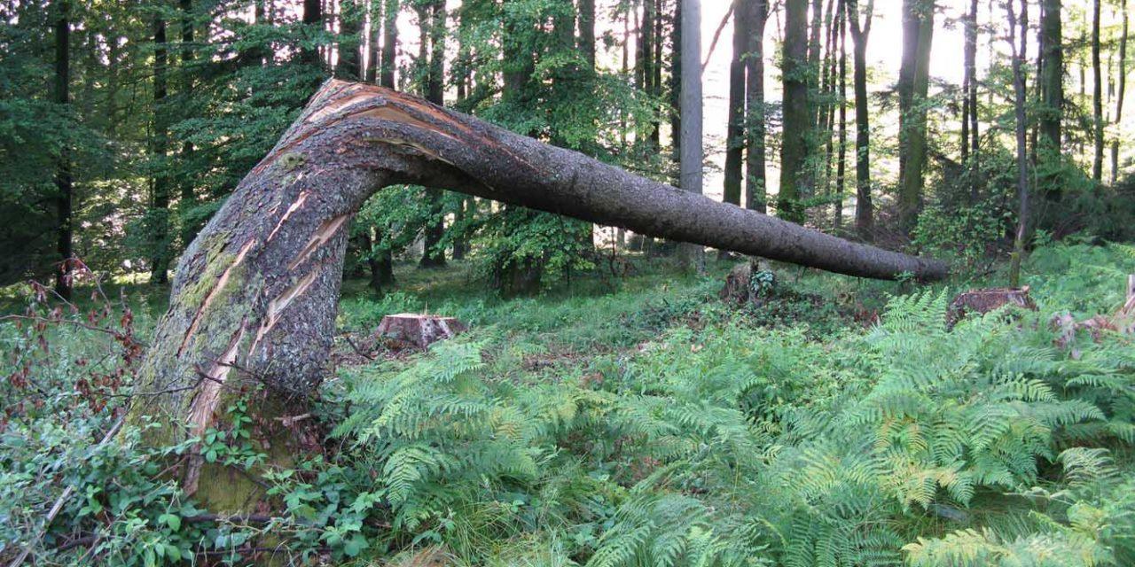 Klimakrise und Trockenheit: Waldsterben 2.0?