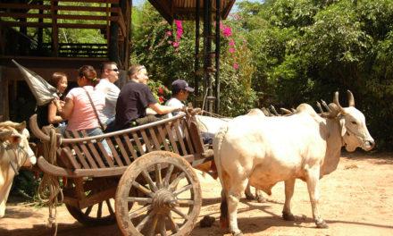 Klimafreundlicher Kommunismus: Kuba setzt auf Ochsenkarren in der Landwirtschaft