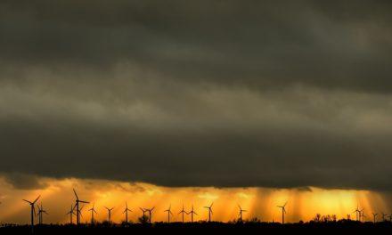 Artenschutz vs. Windkraft-Branche: eine Petition