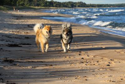 Klimaschädliche Tierhaltung in Coronakrise boomt – EIKE fordert: Hunde und Katzen verbieten!
