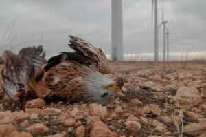 Die Argumente-Tricks der Klima-Alarmisten, Teil 1: Die samtpfötigen Vogelkiller des Volker Quaschning