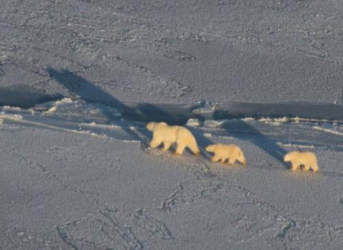 Vor elf Jahren sagte Al Gore voraus, dass der Nordpol in fünf Jahren eisfrei sein würde