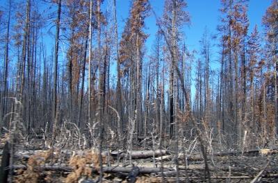 Wie schlechte Wissenschaft und Horror-Journalismus Buschbrände und Klima falsch darstellen