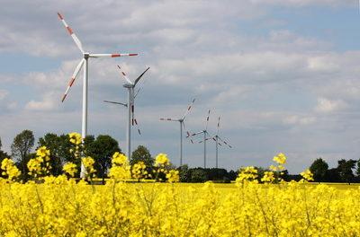 Windturbinen-Wahnsinn gefährdet Spezies