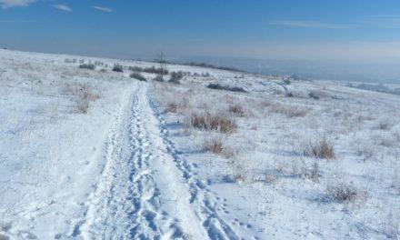 Winter 2019/20 – Hoffen auf späte Kälte durch Zirkulationsstörungen?