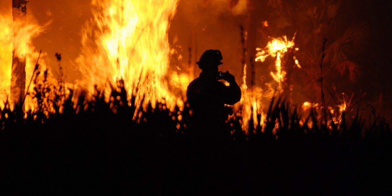 Buschbrände in Australien: Folgen grüner Politik