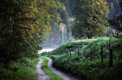 Den Bayerischen Wäldern geht es nur schlecht, weil die schlimmere Vergangenheit abgeschnitten wird