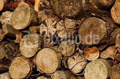 """Holzpellets: Das schmutzige Geschäft mit der """"sauberen"""" Energie*"""