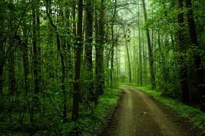 Das Klima kollabiert, und der Wald stirbt jetzt auch wieder