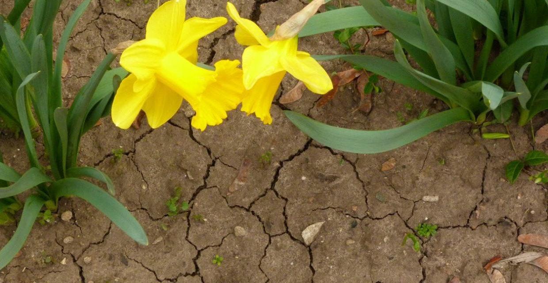 Viel zu trockener Frühling in Deutschland – die meteorologischen Hintergründe