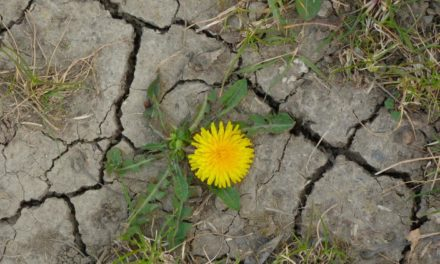 Erneute Frühjahrsdürre in Deutschland – eine Ursachenforschung