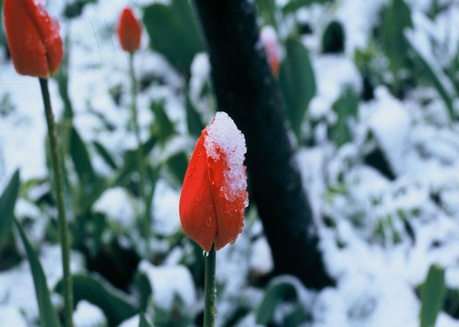 Der April wurde durch einen Temperatursprung im Jahre 2007 wärmer.