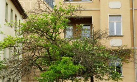 Frühling: Auf der Suche nach der verlorenen Jahreszeit